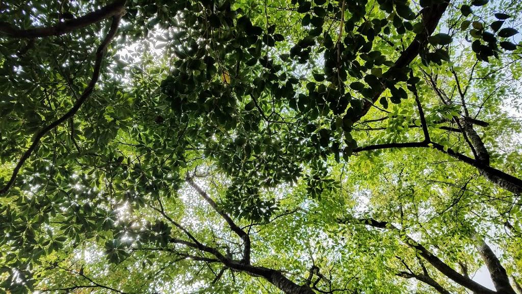 クラフトの城敷地内のさまざまな広葉樹
