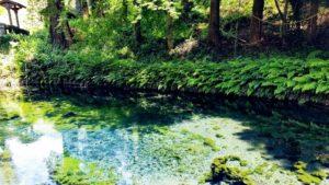 白川水源 湧水場所