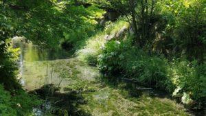 水源へ続く小川 緑に覆われて美しい