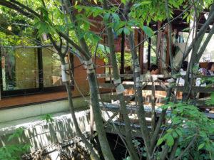 緑に包まれた白川水源のテラスは憩いの場