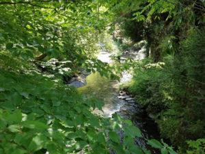 白川水源の美しい景色